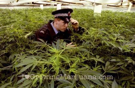 How to grow pot and not get caught