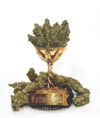 I love marijuana cannabis cup