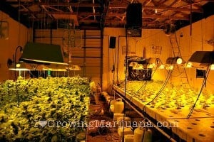 Electrical Safety Guide For Growing Marijuana Indoors
