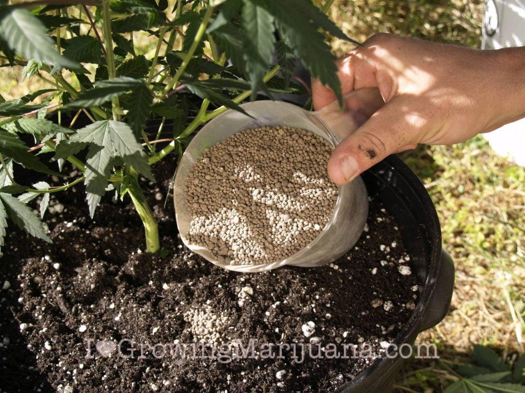 I love marijuana homemade fertilizers