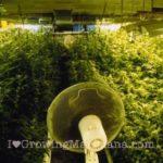 I love marijuana hydroponic
