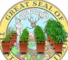 Idaho outdoor marijuana growing