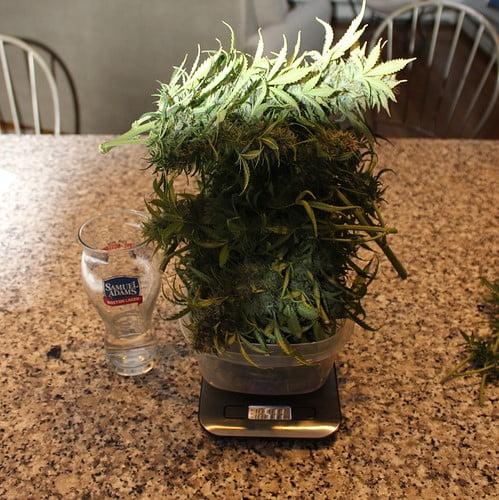 DIY-grow-box-result
