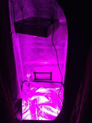 grow-tent-dim-light