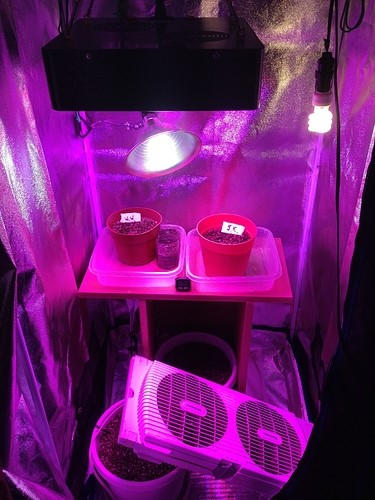 watered-plants-inside-grow-tent