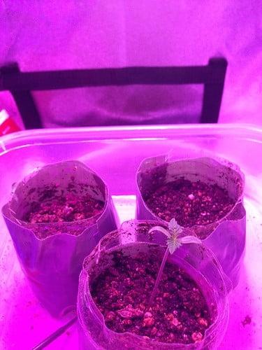 survived-plants