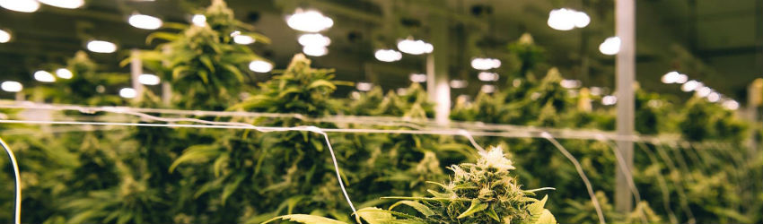 keeping your grow on the DL
