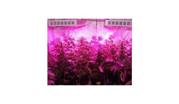 led marijuana grow lights