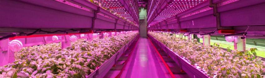 Plants growing indoors under LED lights