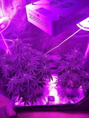 both-growing-plants