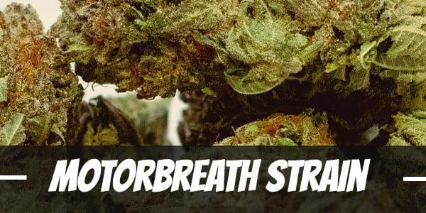 Motorbreath strain