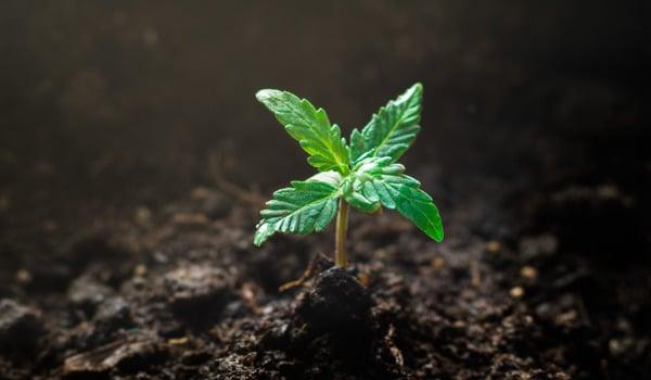 marijuana investing facts expectation patience