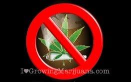 Cannabis myths debunked