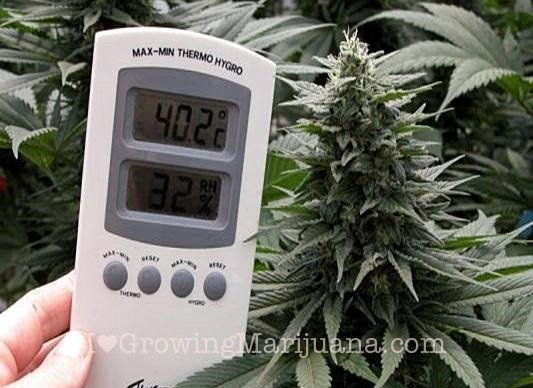 Measuring temperature in cannabis grow room