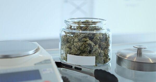 Dried cannabis buds in a jar beside a digital weighing scale