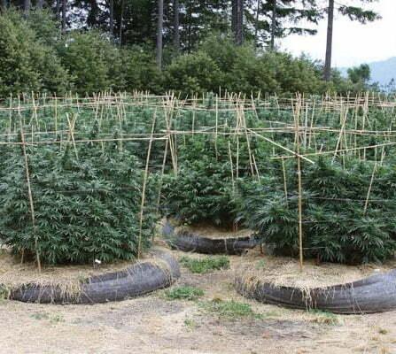 Organice soil weed