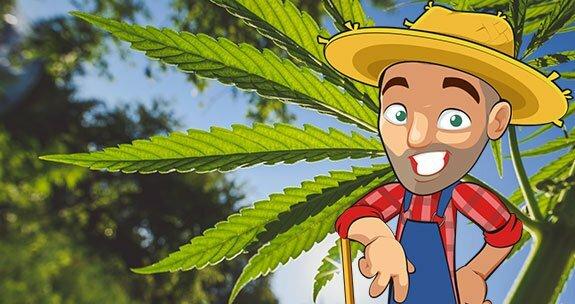 marijuana grow calendar