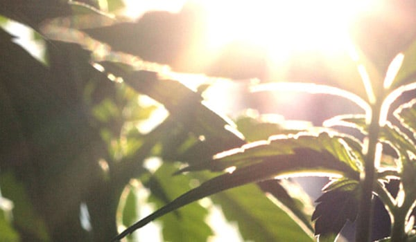 outdoor sunlight growing seedlings