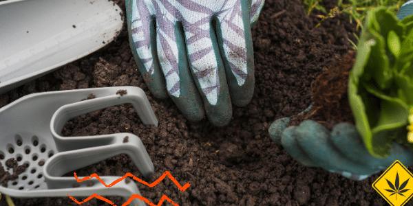 benefits of Companion Gardening