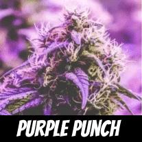 purple-punch