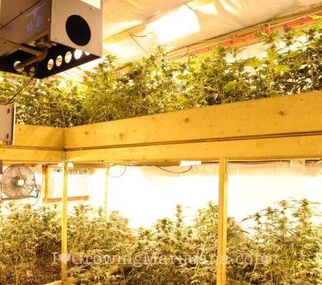 Single or double grow room weed