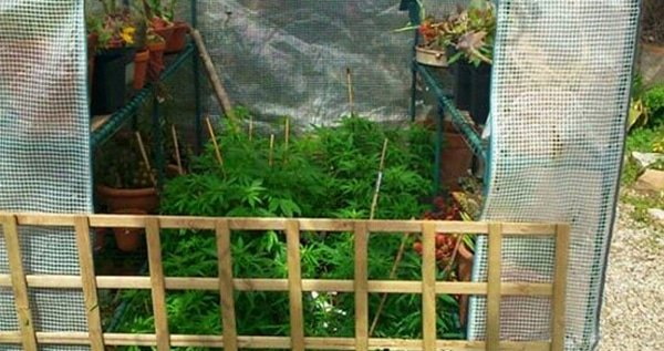 small-greenhouse-for-growing