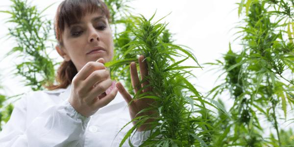 Smelling Marijuana