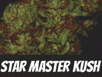 Star Master Kush