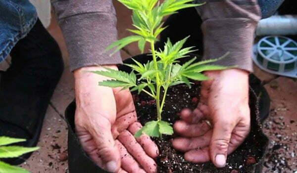start putting plants outside