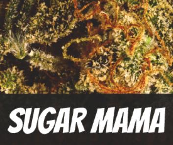 Sugar Mama Strain
