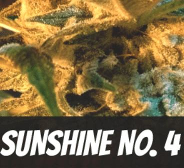 Sunshine No 4 Strain