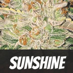 Sunshine Strain