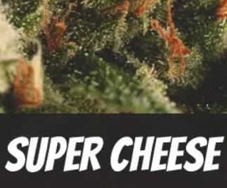 Super Cheese