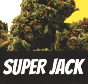 Super Jack Strain