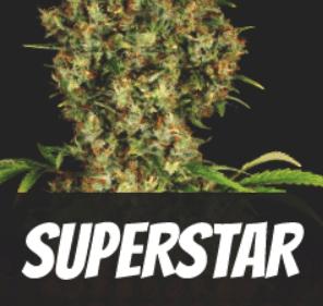 Superstar strain