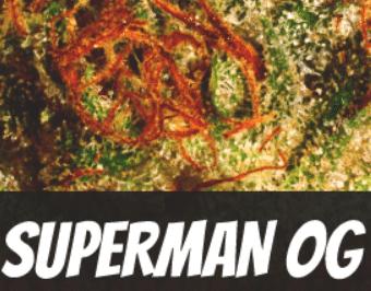 Superman OG Strain