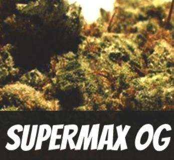 Supermax-OG-Strain