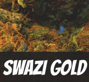 swazi-gold-strain