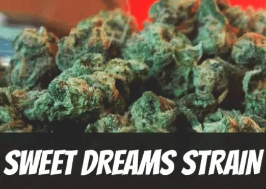 sweet-dreams-strain