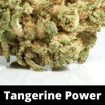 tangerine-power-strain