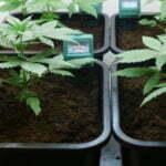growing indoor expensive