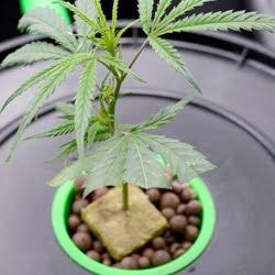 week 1 vegetation hydro 2