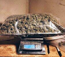 best marijuana scale