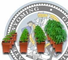growing weed in wyoming