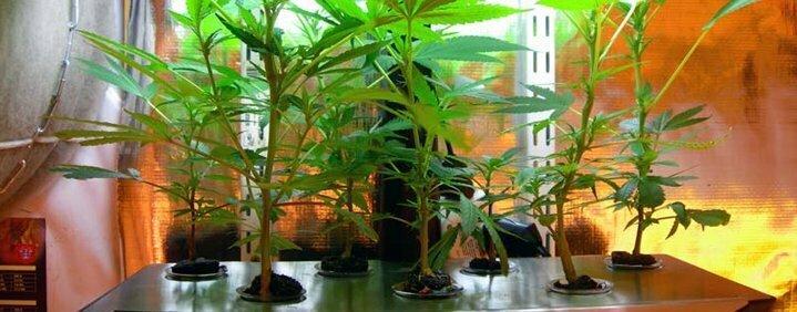 Hybrid systems cannabis growing