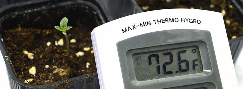 temperature for seedlings weed