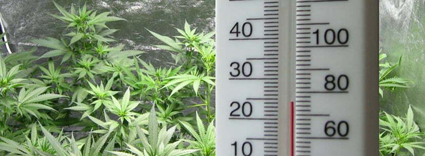 temperature growing weed