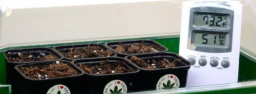 Place marijuana pots 2 inches below CFL tube