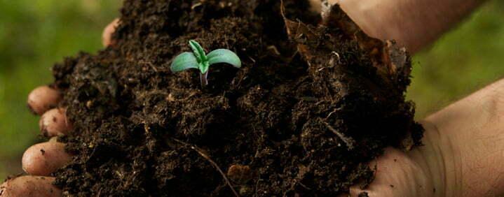 sterilized soil cannabis