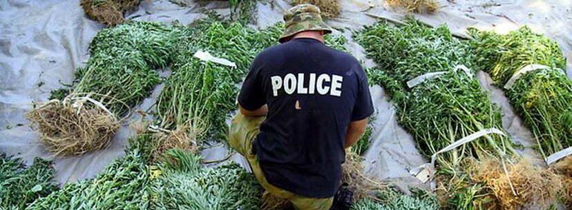 Harvest security cannabis